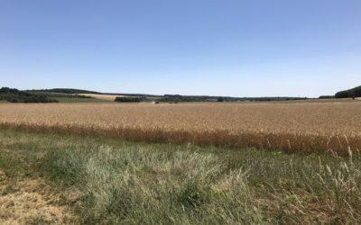 5 juillet : Flagy – Champigny