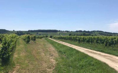11 juillet : Bergerac – Saussignac